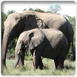 Addo National Elefanten Park