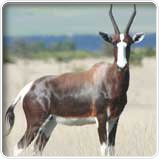 Bilder Bontebok National Park