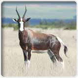 Bontebok Nationalpark